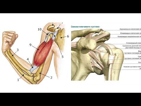 Боль под передней дельтой в плече. Вправляем внешнее сухожилие бицепса. Правильный Бодибилдинг