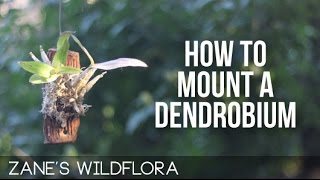 How To Mount A Dendrobium