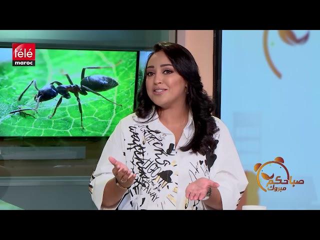 2db669622b58f تعرفوا على فوائد زيت النمل مع خبيرة التجميل غزلان مكوار - تيلي ماروك