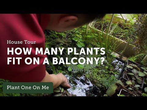 Ep 103. Balcony Gardening: Houseplant Home Tour with James Ipy