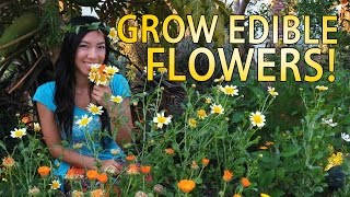 Edible Flowers You Can Grow