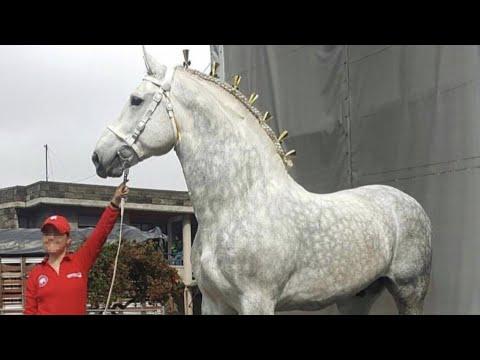 , title : 'Percheron Horses | Power Grace Utility