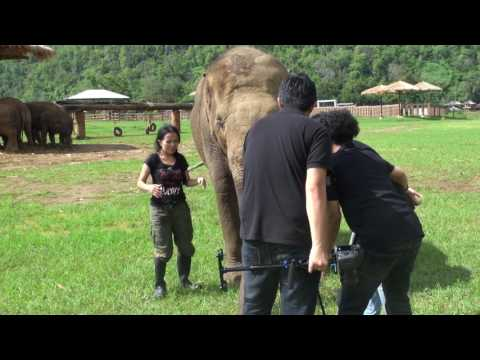 Elephant want to join interview with her favorite person
