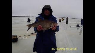 Рыбалка в ленинградской области на реке свирь