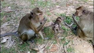 Ants Bite Cute Baby Monkey On The Hill ST219