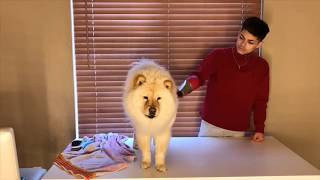 CHOW CHOW - Care Guide