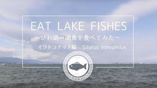 【びわ湖の魚を食べる】びわ湖の湖魚を食べてみた イワトコナマズ編