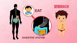 Stomach | Human Body Parts | Pre School | Animated Videos For Kids