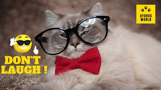 Cute and funny cat videos -Tik Tok #55