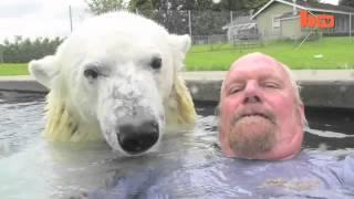 Дедушка играет с белым медведем