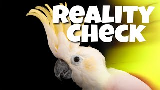 Warning! The Truth About Cockatoos