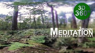 360° Forest Meditation Escape (Stereoscopic [3D] 360° VR Video)
