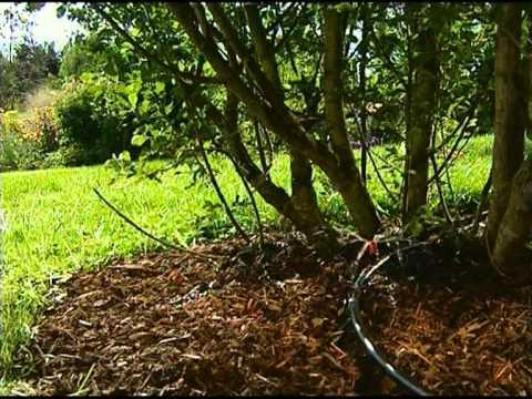 tuinbesproeiing-en-sproeiers