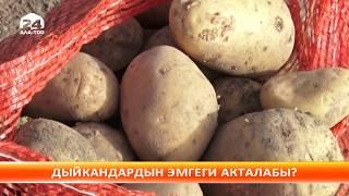 Өзбекстан кайрадан Кыргызстандан картошка сатып ала баштады