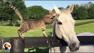 Cat Kisses Horse BFF | The Dodo
