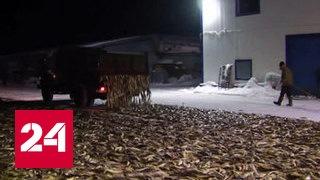 Сахалинские рыбаки приступили к полноценному лову наваги