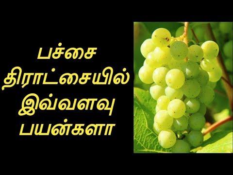 Grapes in Nashik, अंगूर, नासिक - Latest Price & Mandi