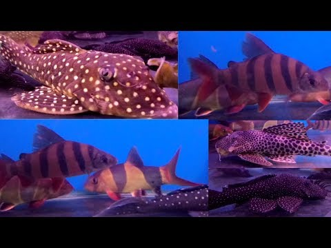 Rivo Fish Tanks At Naaz Aquarium Kurla Fish Market Hot Videos 2018