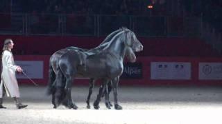 Лошади, Танец фриза)