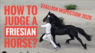 How To Judge A Friesian Horse. Which One Is The Best? Stallion Inspection 2020.