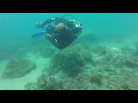 Beautiful coral at Gorkana Point Trincomalee Sri Lanka