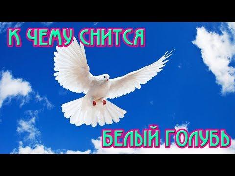 К ЧЕМУ СНИТСЯ БЕЛЫЙ ГОЛУБЬ / СОННИК