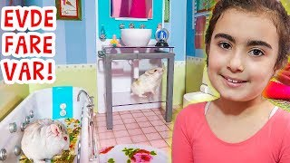 Minik Fare Vanilya Barbie Evinde   Mira ile Hamster Videoları   UmiKids