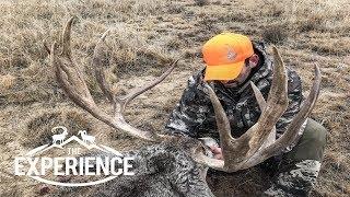 """Giant Eastern Plains Mule Deer – """"Colorado"""""""