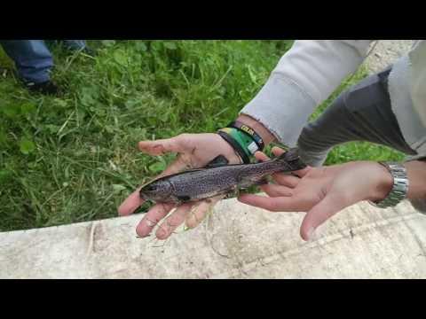 Trattamento di un fungo di piede e unghie nel modo nazionale