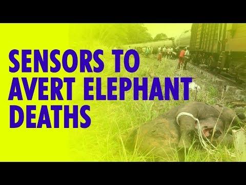 IIT Delhi finds solution to avert elephant deaths on railway tracks