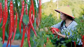Video : China : Chopped chili peppers