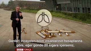 Günde Bir Paket Sigaranın Vücuda Maliyeti...
