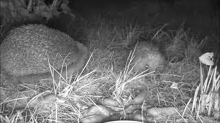 Wildlife Trail Camera - 5.9.2019