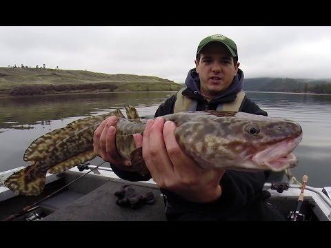Fiskeri efter knuder med jig