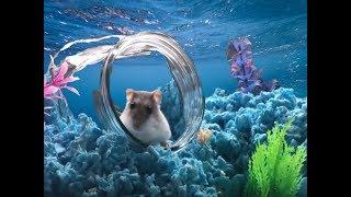 Deep Blue Sea Hamster Cage Theme