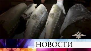 В Иркутской области у браконьеров изъяли тонны черной икры, которую перевозили под видом горбуши.