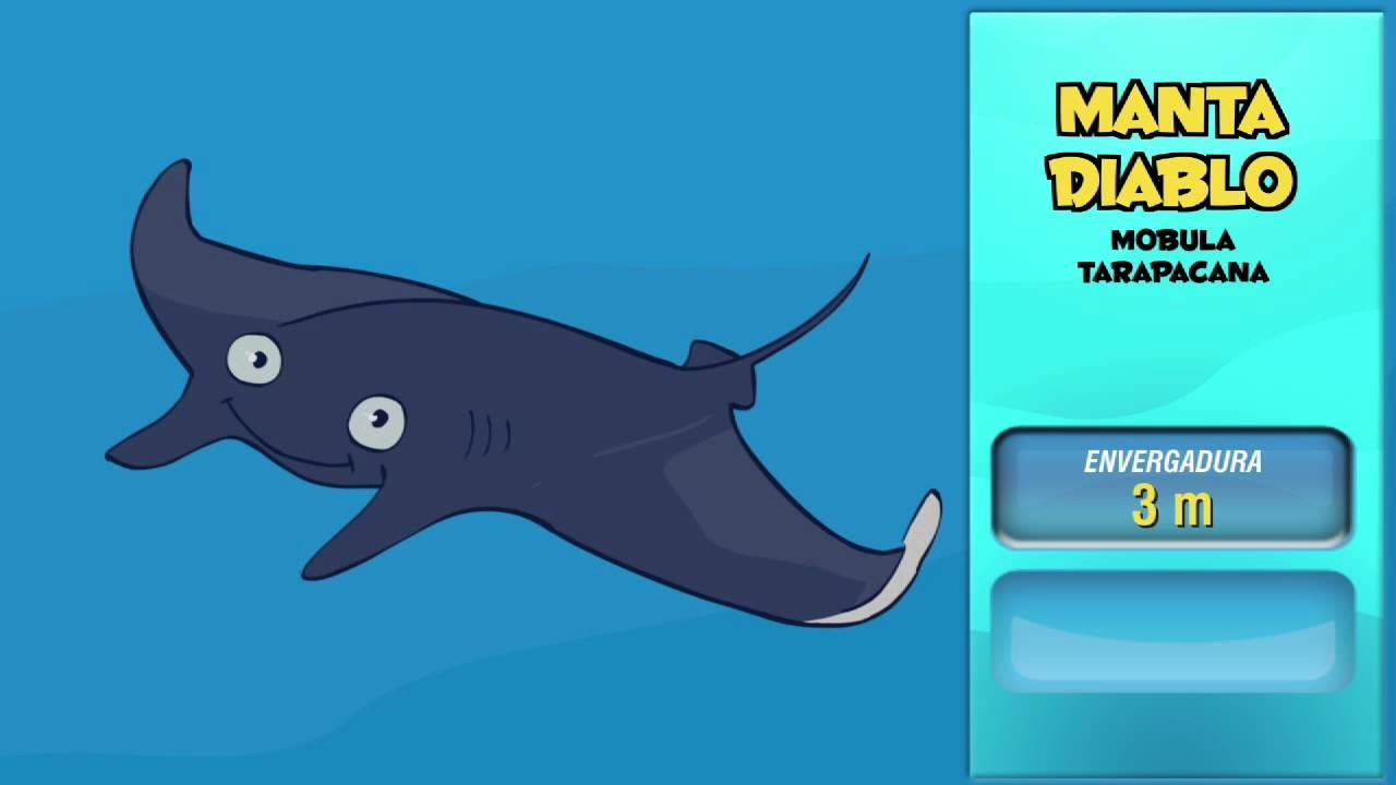 Cuáles son los animales marinos más rápidos.6