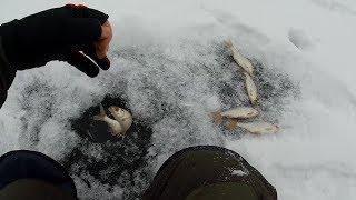 Зимняя Рыбалка на кошачий глаз. Плотву ловит одну за одной