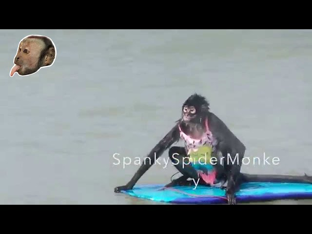 Monkey Surfer Chick!