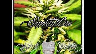 Smokin Dro (Music Video Teaser)