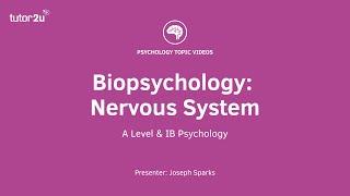 Biopsychology: Nervous System Explained