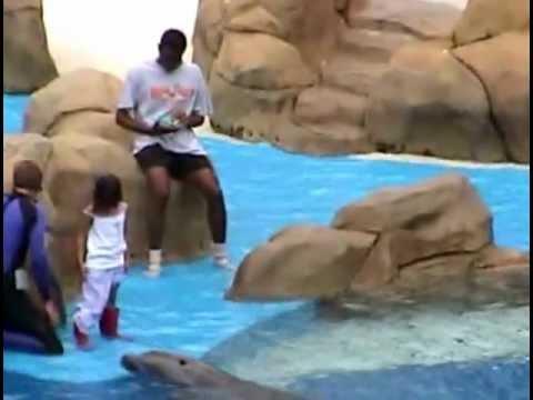 Sea World Orlando Whale & Dolphin Show August 2003