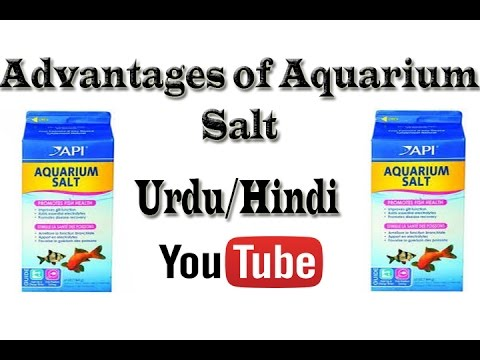 How To Advantages of Salt (NaCl) in Fish Tank Urdu/Hindi