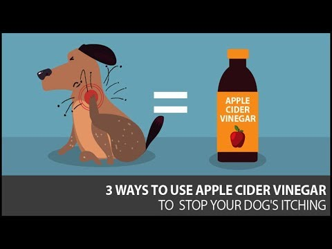 3 Simple Ways Apple Cider Vinegar Can Help Your Dog