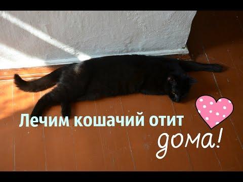 Как Вылечить Отит у Кошек! (совет ветеринара)