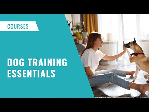 Dog Training Essentials Online Course #dogtraining ... - YouTube