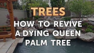 How to Revive a Dying Queen Palm Tree