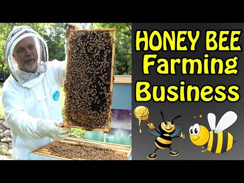 , title : 'How To Start Honey Bee Farming Business