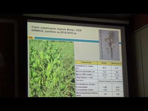Технология возделывания гороха, люцерны и эспарцета