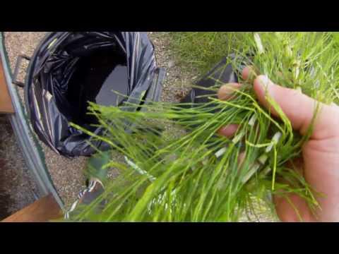 Remettre lanalyse sur les helminthes rostov sur donou